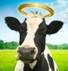 heathen cow god idol